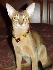 Cat collars that look good and are safe.